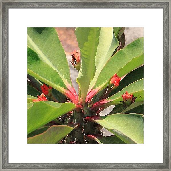 Catch Of The Day, One More Tropical Framed Print