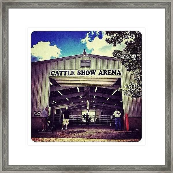 Cattle Show Arena Framed Print