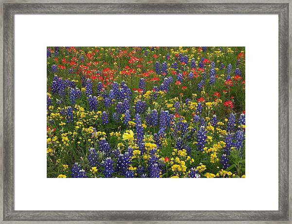 Central Texas Mix Framed Print