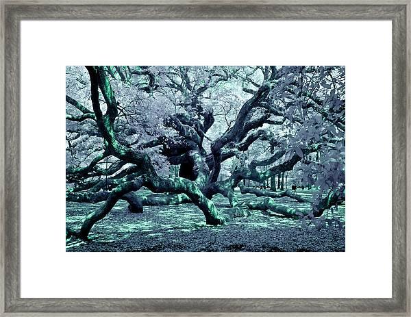 Charleston's Angel Oak Framed Print