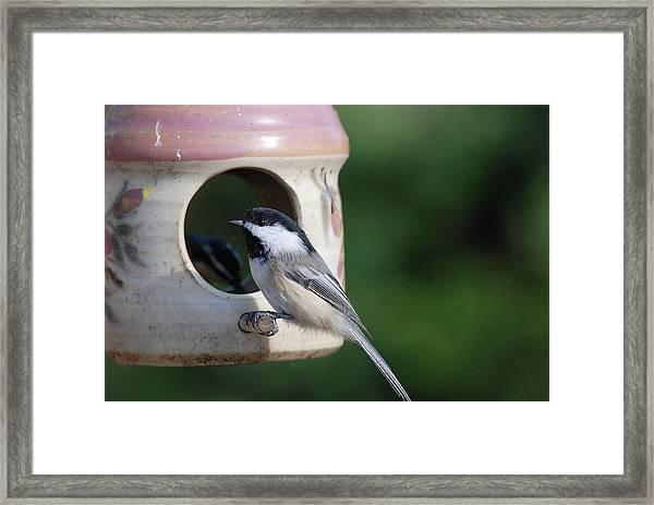 Chickadee Posing At Feeder Framed Print