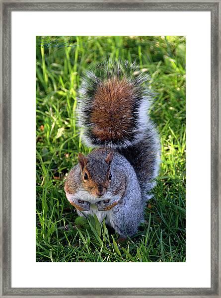 City Squirrel Framed Print