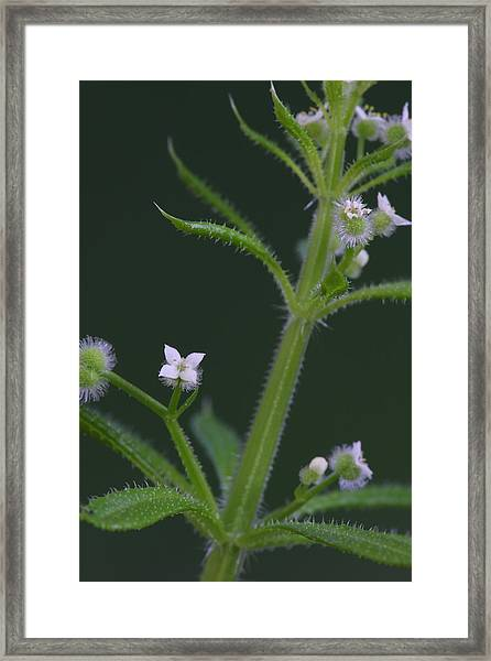 Cleavers Framed Print