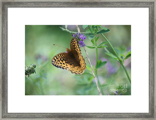 Close-up Butterfly Framed Print