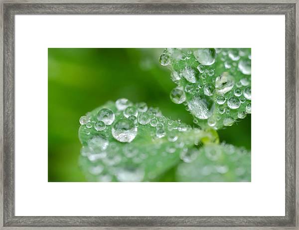 Close Up Clover Framed Print