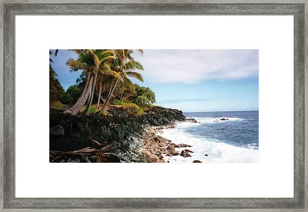 Coconut Palms Framed Print