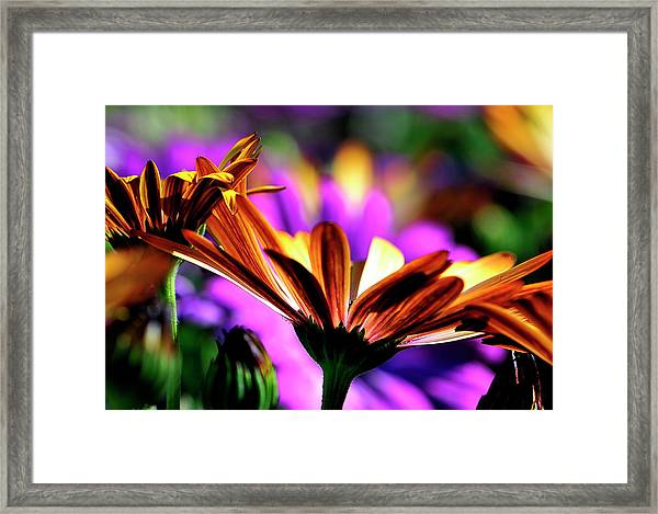 Color And Light Framed Print