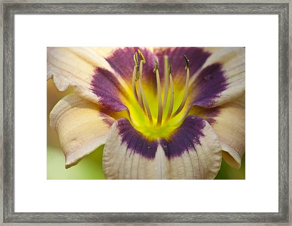 Colorful Lily Framed Print