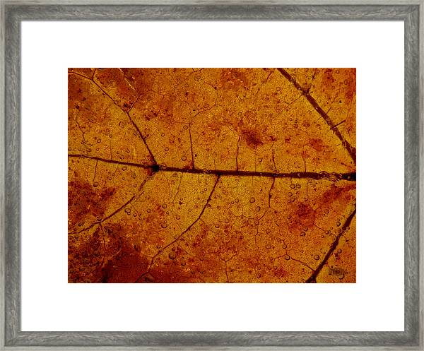 Colors Of Nature 4 Framed Print