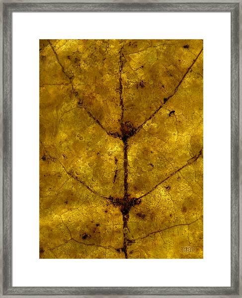Colors Of Nature 5 Framed Print
