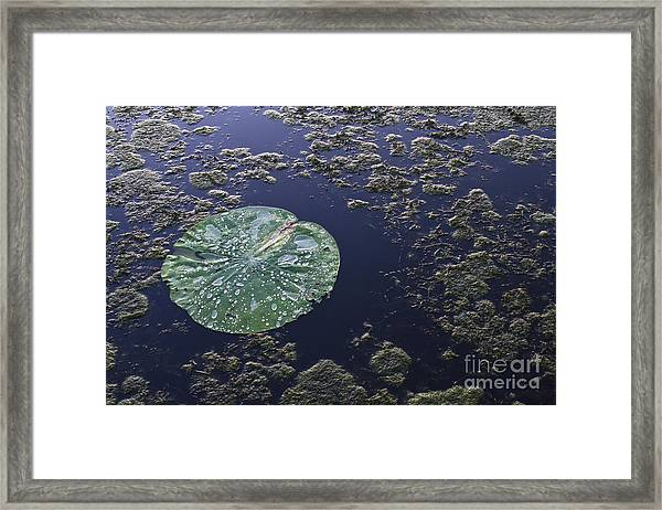 Colors Of Our Planet Framed Print