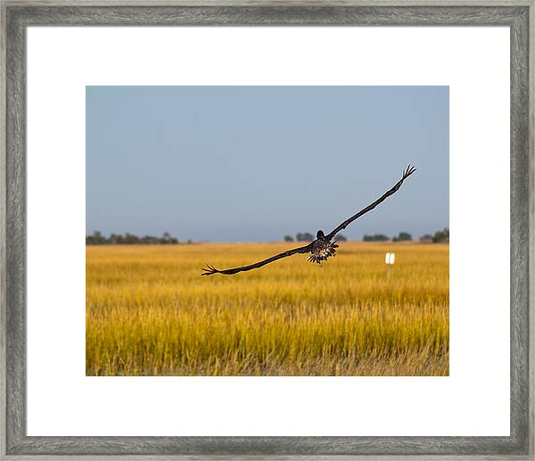Framed Print featuring the photograph Come Fly With Me by Francis Trudeau