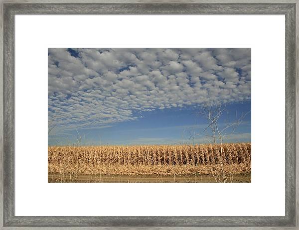 Corn Fields In West Framed Print