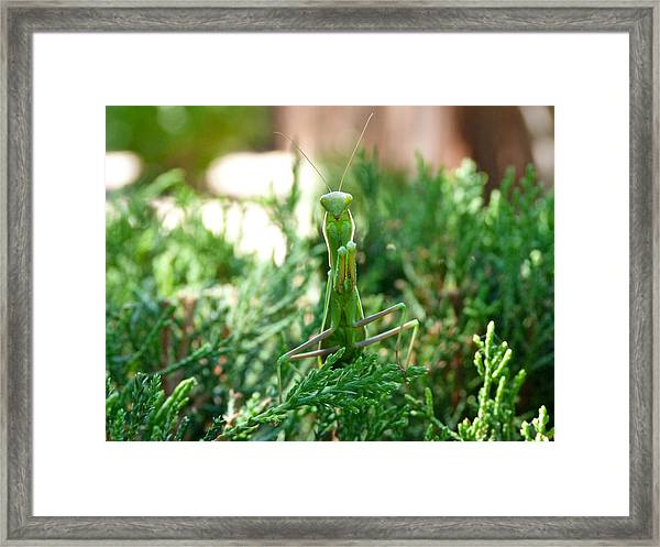 Count Your Blessings Framed Print