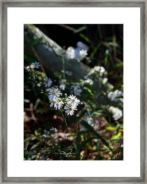 Country Memory Framed Print