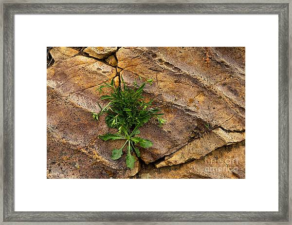 Crack  In The Wall Framed Print