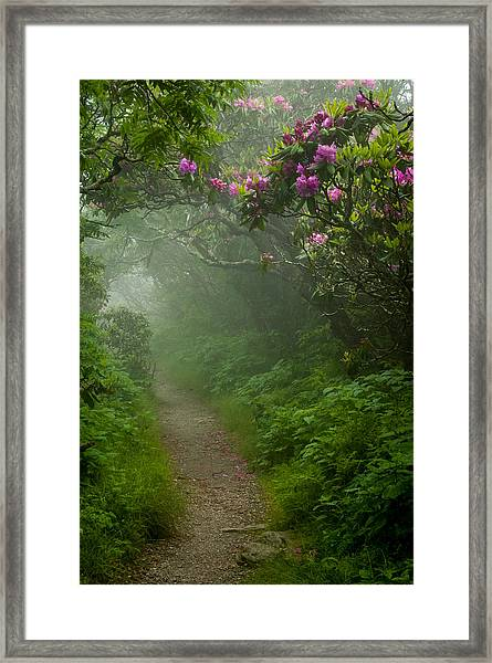 Craggy Path 2 Framed Print