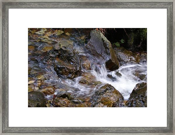 Creek Scene On Mt Tamalpais Framed Print