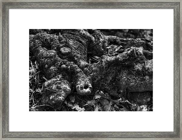 Crockedile Tree Framed Print