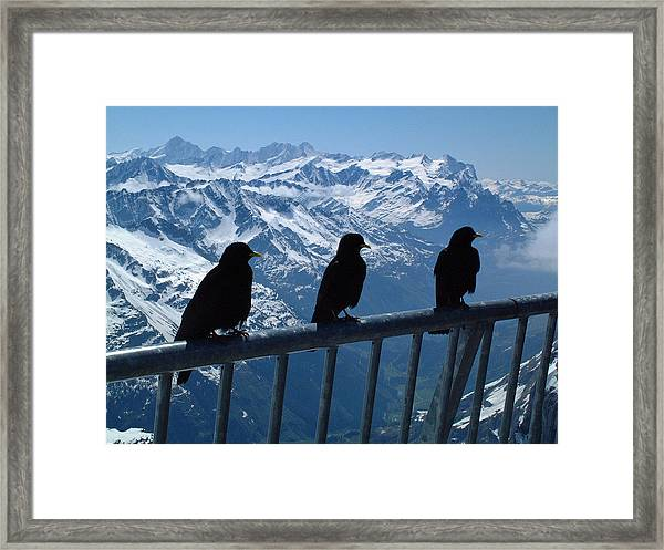 Crows On Top Of Mount Titlis Switzerland Framed Print