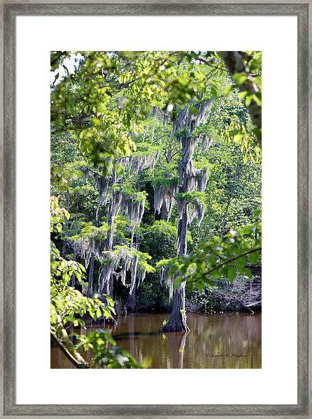 Cypress Strong Framed Print