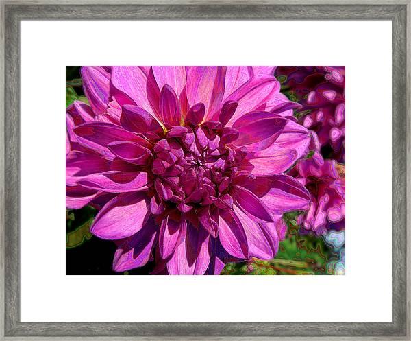 Dahlia Describes The Color Pink Framed Print