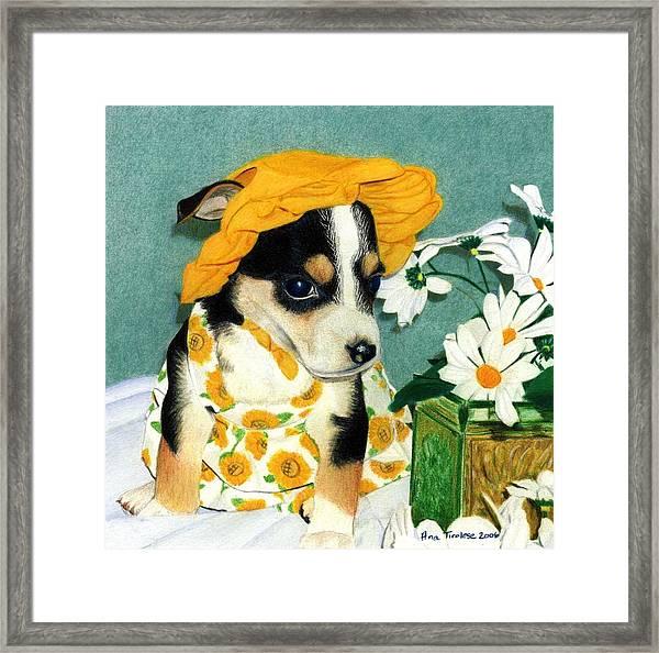 Daisy-mae Dawg Framed Print