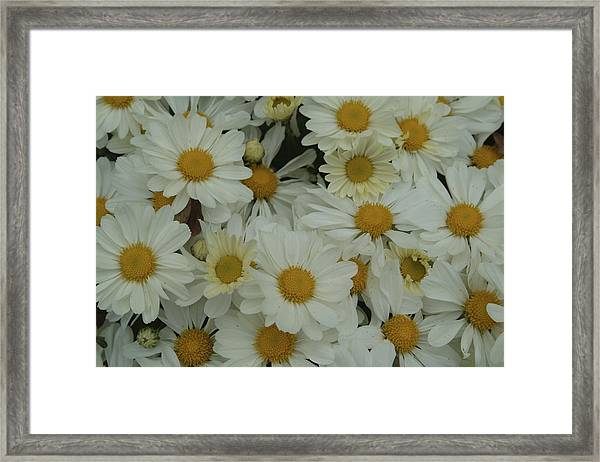 Framed Print featuring the photograph Daisy by Ralph Jones