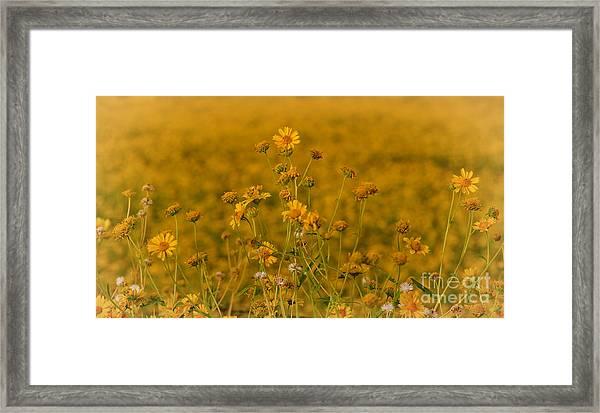 Daisy's Framed Print