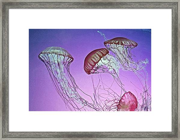 Dance Of The Jellyfish Framed Print