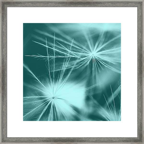 Dandelion Art 2 Framed Print by Falko Follert