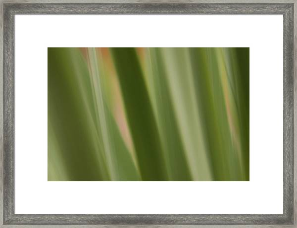 Dawn Reaches Deeply Framed Print
