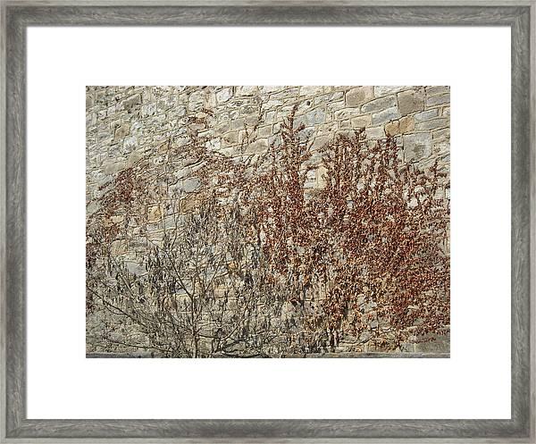 Dead Ivy Framed Print