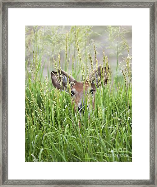 Deer In Hiding Framed Print