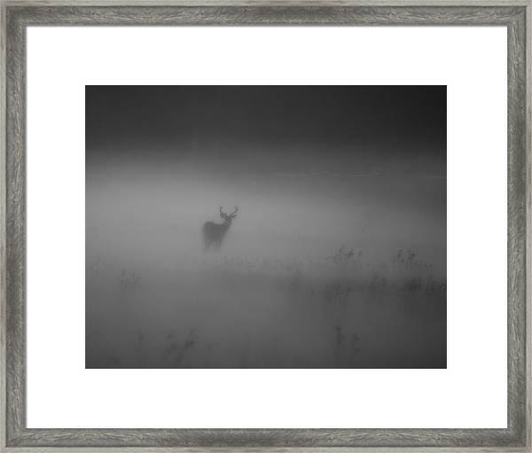 Deer In The Fog Framed Print by Nicholas Palmieri