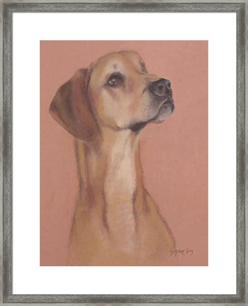 Demo The Hero Dog Framed Print