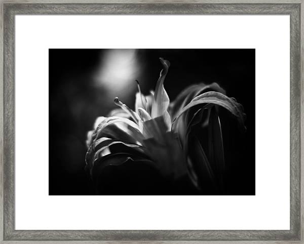 Descent Of The Spirit Framed Print