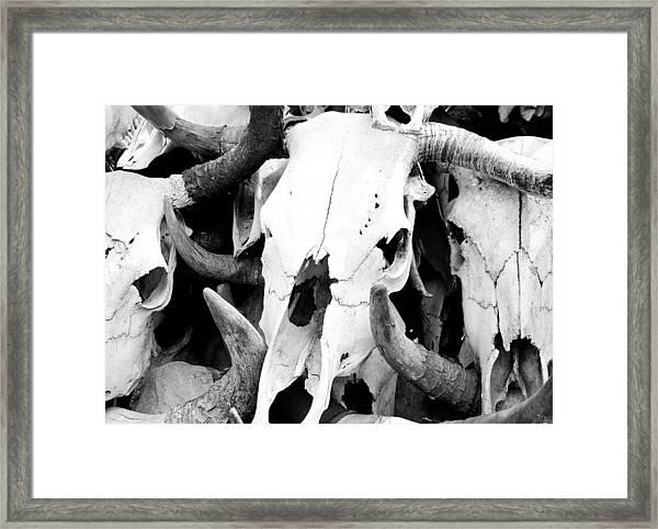 Desert Bones Framed Print by Margaret Pitcher
