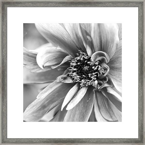 Detail Of A Flower Framed Print