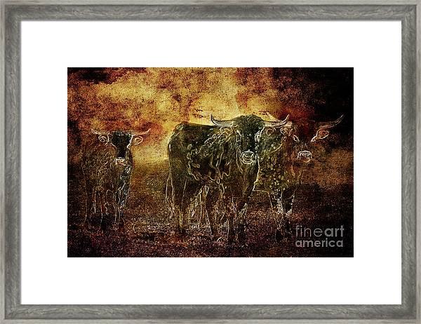 Devil's Herd - Texas Longhorn Cattle Framed Print