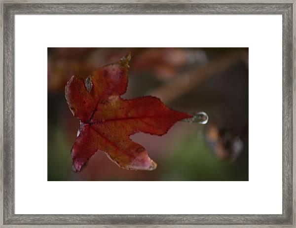 Dew Drop Framed Print