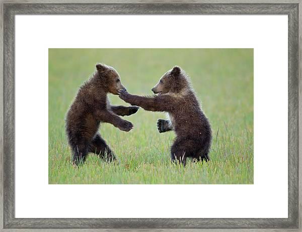 Disco Cubs Framed Print
