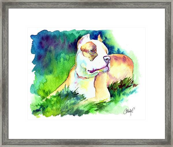 Diva Momma Pit Bull Framed Print