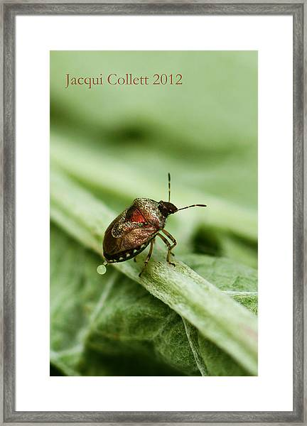Doing What Comes Naturally Framed Print