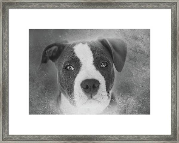 Don't Hate The Breed - Black And White Framed Print by Larry Marshall