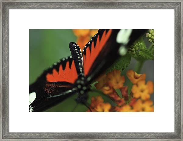 Doris Longwind Red Version Framed Print