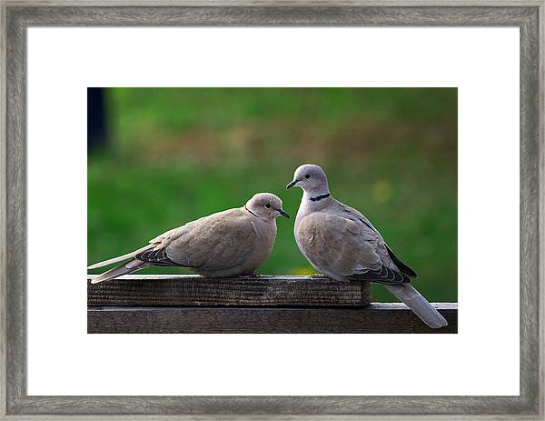 Doves Framed Print