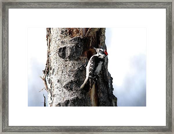 Downy Nest Construction Framed Print