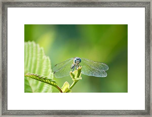Dragonfly Face Framed Print