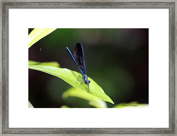 Dragonfly Fly Framed Print